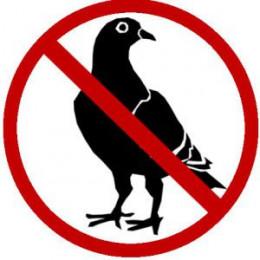 Pointes anti-oiseau